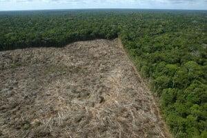 desmatamento%20-%20divulgação
