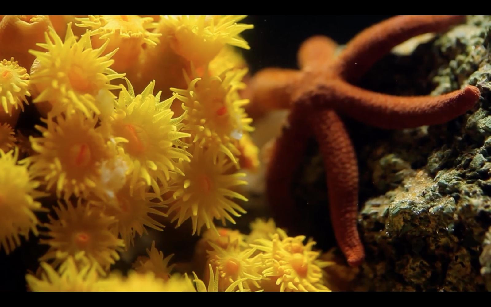 Compacto Documentário Projeto Coral-Sol