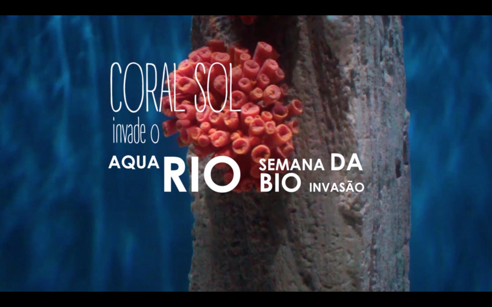 Coral-Sol invade o AquaRIO